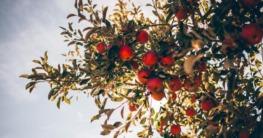 apfelbaum im herbst schneiden