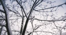 Bäume schneiden bei Frost